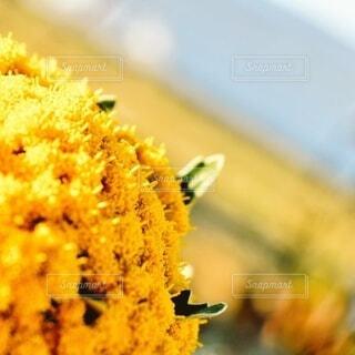 花,ひまわり,黄色,蜂