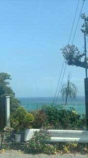 自然,海,空,花,屋外,ビーチ,晴れ,水面,沖縄,樹木,ヤシの木,草木,眺め,日中