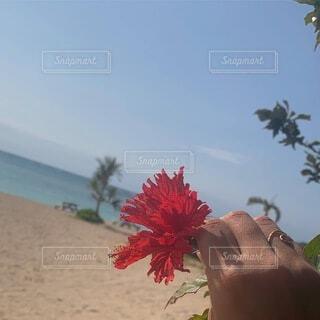 自然,海,空,花,木,砂,ビーチ,晴れ,砂浜,ハイビスカス,手,沖縄,花びら,浜辺,chill,草木