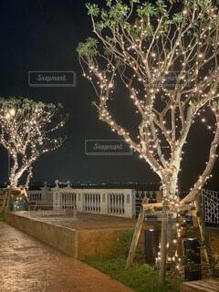 空,夜,屋外,沖縄,樹木,イルミネーション,クリスマス,明るい,美浜,美浜アメリカンビレッジ,クリスマス ツリー