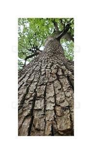 木,樹木,草木,小石川植物園