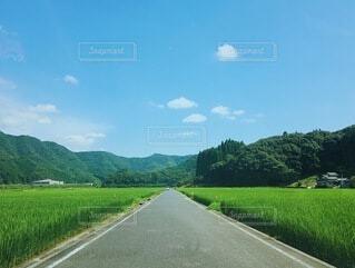 自然,風景,空,屋外,雲,田舎,山,草,樹木,草木