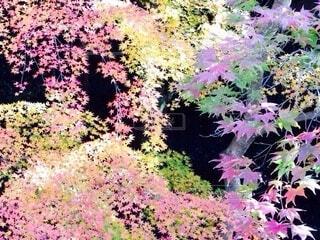 花,秋,草木,ガーデン