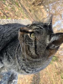 猫,動物,屋外,かわいい,草