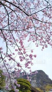 山と桜の写真・画像素材[4295441]