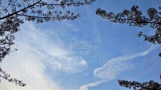 春の空の写真・画像素材[4301794]