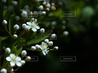 白い花が引き立つ濃い影の写真・画像素材[4431354]