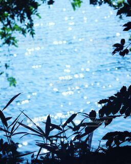 キラキラ光る水面を縁取る草木の写真・画像素材[4607459]