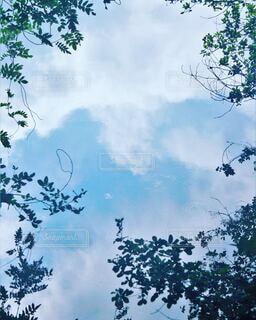 池に写りこんだ空を草木が縁取るの写真・画像素材[4607569]