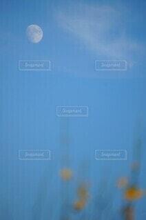 自然,風景,空,屋外,雲,ぼかし,草花,月,昼,青い,コピースペース,テキストスペース
