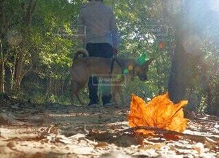 秋の朝の散歩道の写真・画像素材[4896386]
