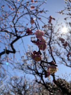 空,花,春,屋外,葉,樹木,草木,ブロッサム,支店