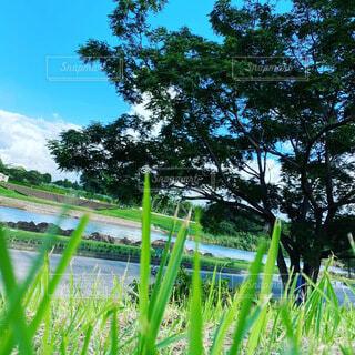自然,空,屋外,緑,樹木,草木