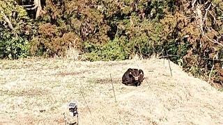 草の中に立っているクマの写真・画像素材[4188733]