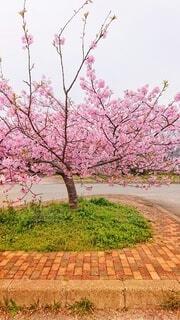 ピンクの花を持つ木の写真・画像素材[4200854]