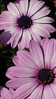 花のクローズアップの写真・画像素材[4283890]