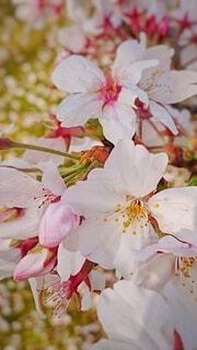 花のクローズアップの写真・画像素材[4286975]