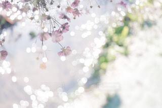 雨上がりのコスモス畑の写真・画像素材[4176930]