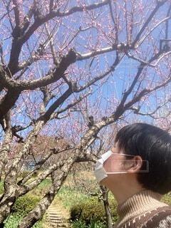 空,公園,花,春,屋外,梅,樹木,人物,人,梅の木,梅の花,草木,ブロッサム,愛でる,人間の顔