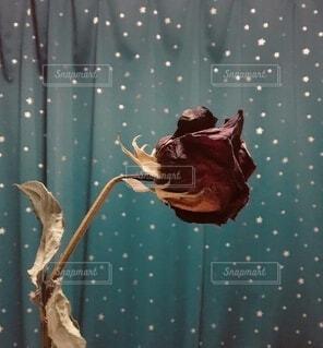 手作りの薔薇のドライフラワーの写真・画像素材[4177793]