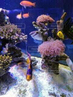 水槽の魚の写真・画像素材[4178055]