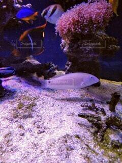 海水魚の写真・画像素材[4178054]