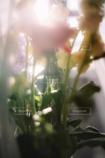 花のクローズアップの写真・画像素材[4185677]