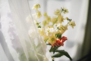 花のクローズアップの写真・画像素材[4185681]