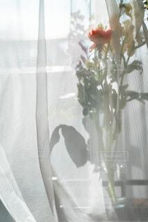 窓際の花瓶の写真・画像素材[4185684]