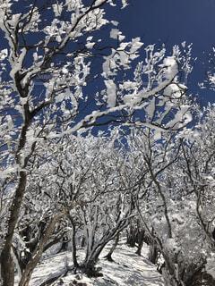 霧氷に覆われた木々の写真・画像素材[4182067]
