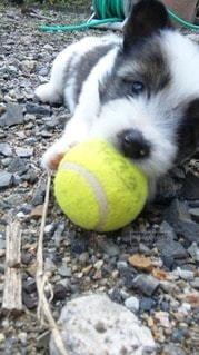 犬の写真・画像素材[25078]