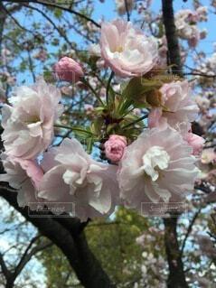 花,春,花束,バラ,薔薇,樹木,草木,ブルーム,ブロッサム