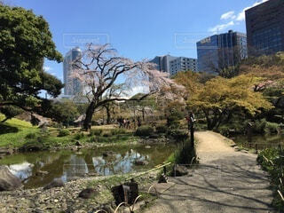 空,公園,建物,春,桜,屋外,湖,水面,草,樹木,高層ビル,歩道,草木,山腹