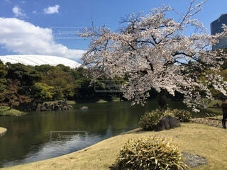 自然,空,花,春,桜,屋外,湖,水面,池,草,樹木,草木,山腹