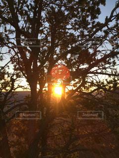 背景の夕日とツリー - No.963107