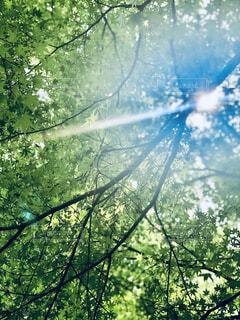 自然に差し込む太陽の光の写真・画像素材[4408539]