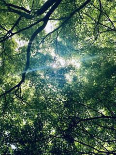 森の中の風景の写真・画像素材[4408544]