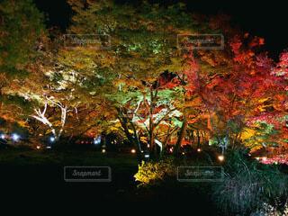 秋,紅葉,屋外,京都,緑,樹木,ライトアップ,カエデ,秋を生きよう