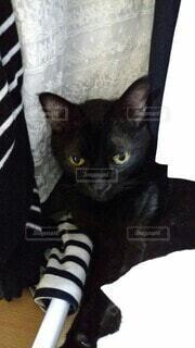 猫,動物,屋内,かわいい,かくれんぼ,黒猫