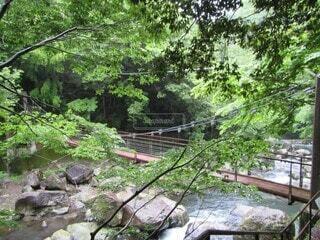 自然,屋外,水面,滝,樹木,ジャングル