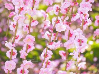 一輪の花に二つのお花の写真・画像素材[4242646]