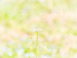 ひとつの花の写真・画像素材[4253528]