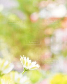 かわいい花の写真・画像素材[4253527]