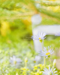青い花の写真・画像素材[4253530]