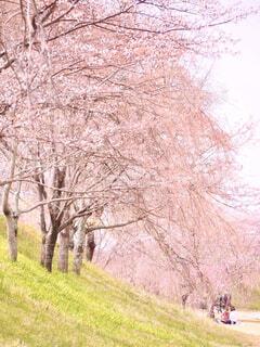 桜の下での写真・画像素材[4283457]