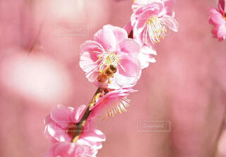 植物の上のピンクの花の写真・画像素材[4406564]