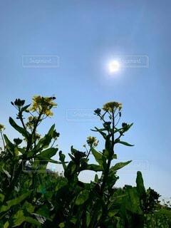 空,花,屋外,太陽,緑,青空,黄色,樹木,ハチ,草木,日中