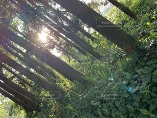 自然,森林,屋外,樹木,草木