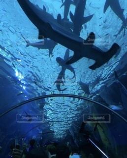 シンガポールの水族館で泳ぐサメの写真・画像素材[4219620]