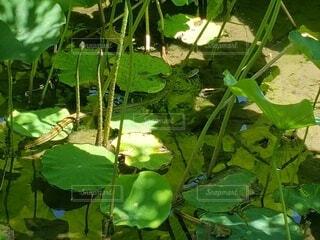 自然,屋外,緑,水面,池,草